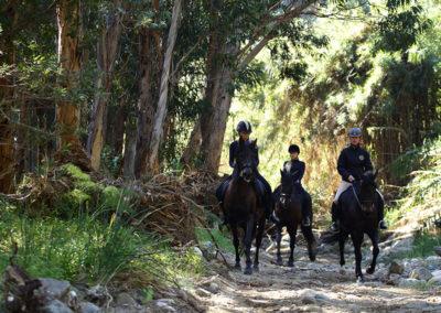 Ruta a caballo en marbella Horse trekking (3)